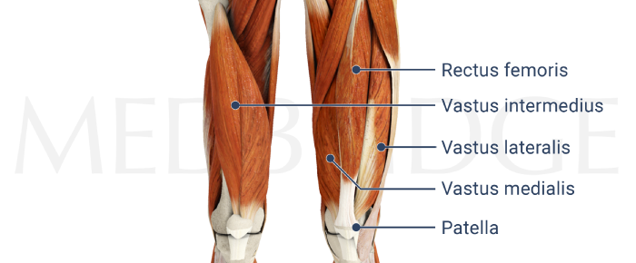 how to train vastus medialis