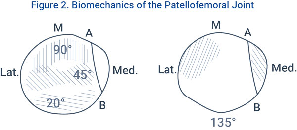 Figure 2. Biomechanics of the Patellofemoral Joint