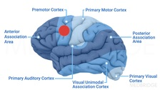 Therapeutic Neural Correlates of Motor Learning