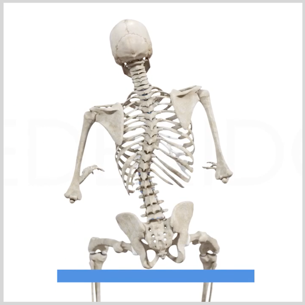4 Common Problems With Wheelchair Pelvic Positioningand Their